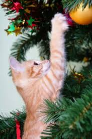 cat and xmas tree 4